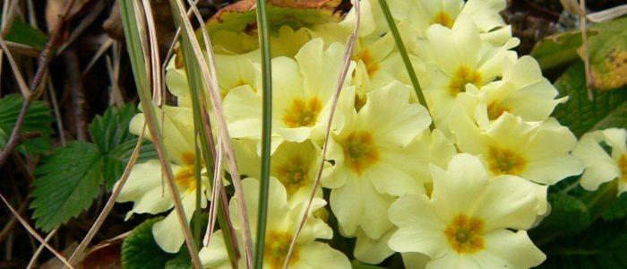 gran sasso flora 4