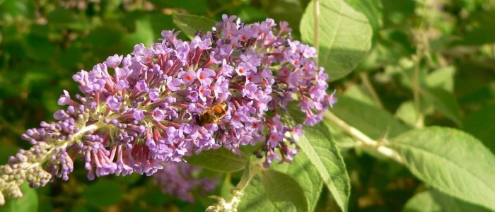 gran sasso flora 5