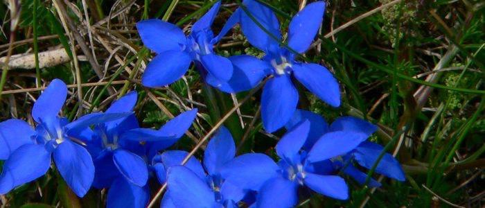 gran sasso flora 8