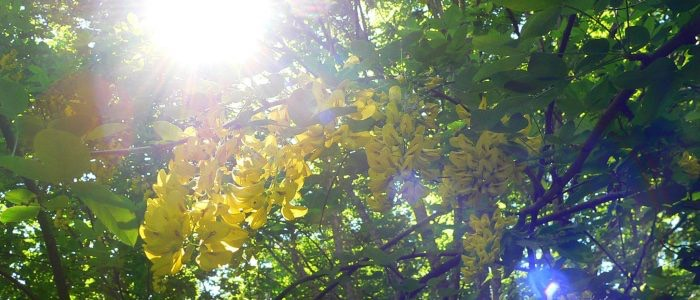 gran sasso flora 6